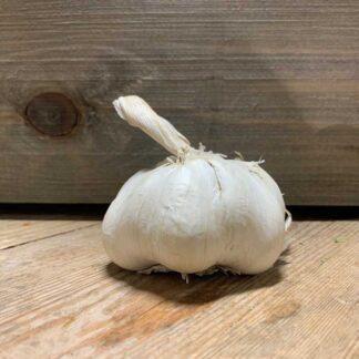 Garlic Jumbo