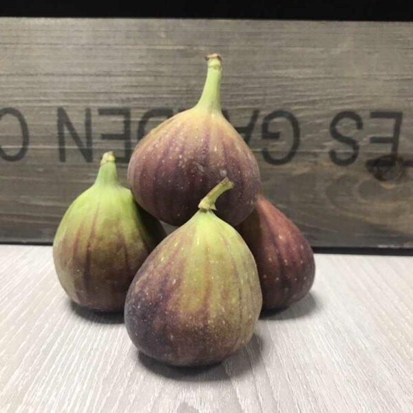 Fresh Figs (Price each)